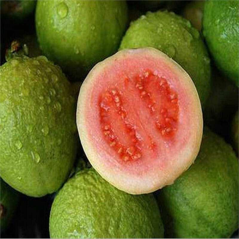 广东特级番石榴珍珠番石榴芭乐 新鲜热带水果5斤